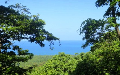 Ocean meets rain forest.